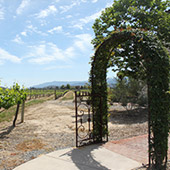 The Ponte Winery Walking Path