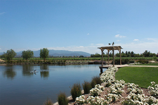 The Ponte Winery Pond