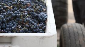 Grape Sales